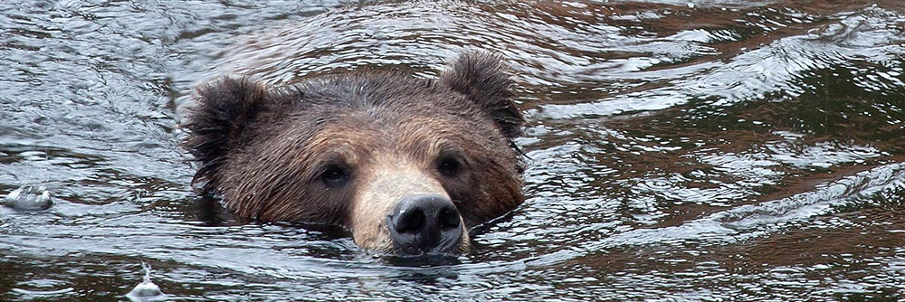 Managing Grizzly Bear Featured on Bass Pro Shops Outdoor World Radio
